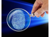 盘点指纹识别芯片厂商,全面屏时代指纹识别怎么玩?