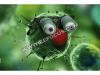 """超级细菌开始横行,物联网能否成为抵制""""奇兵""""?"""