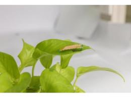 科学家开发敏捷的新型昆虫机器人,可在极小空间中快速转弯