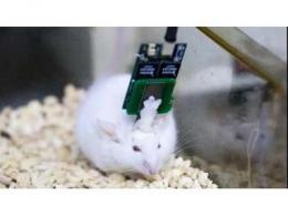 上海微系统所开发出微创植入式高通量柔性脑机接口