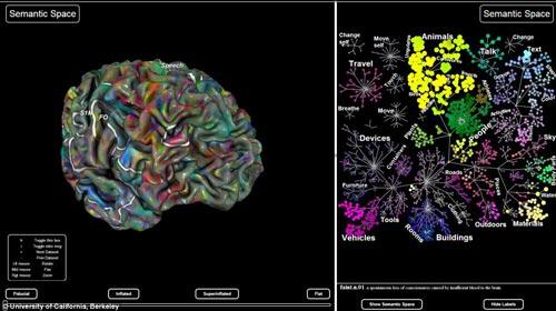 科学家绘制大脑结构图 清晰呈现大脑成像情况图片