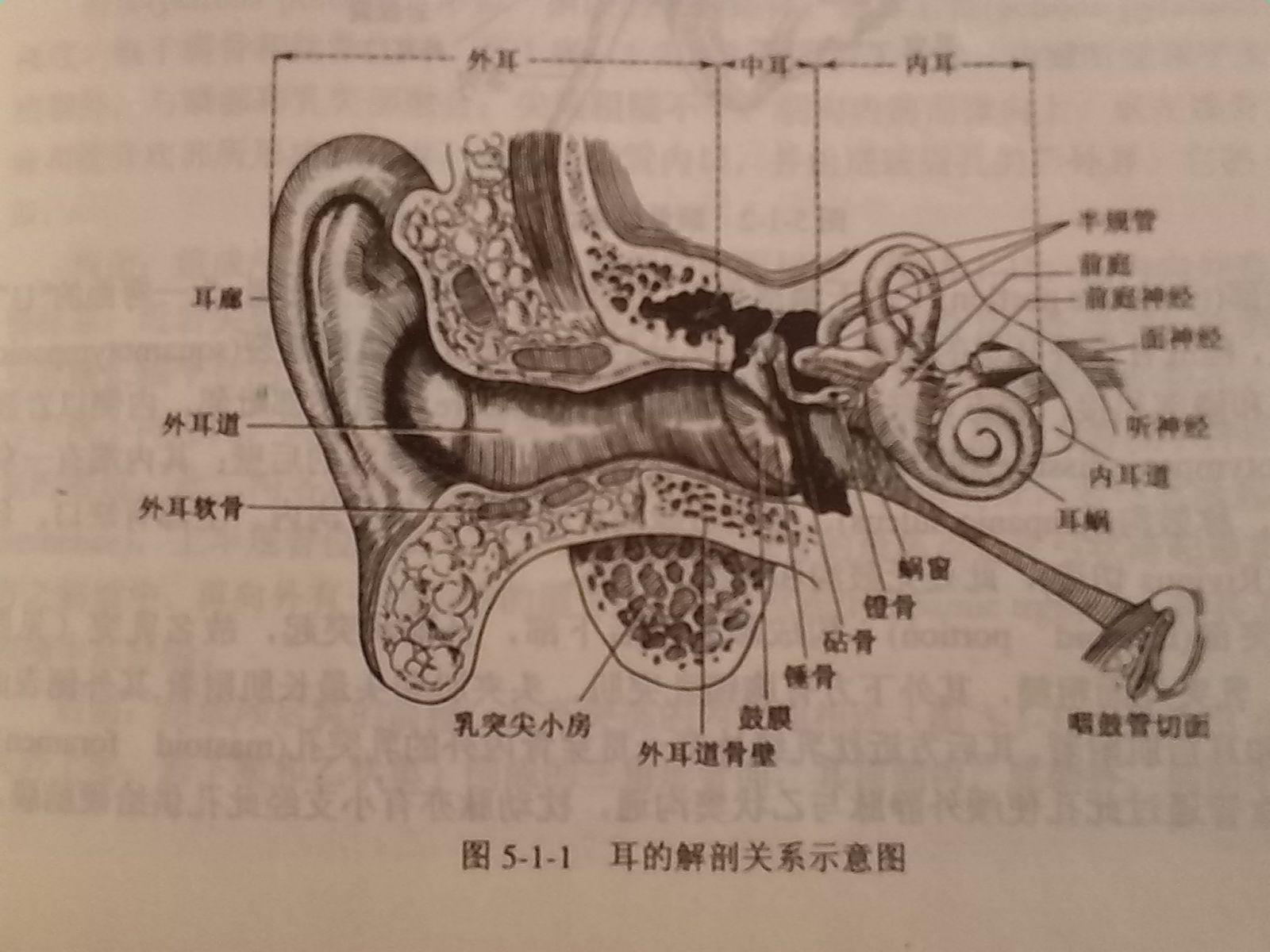 人耳结构的彩色示意图