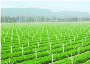 农业智能化设计——智能农田监测灌溉控制系统